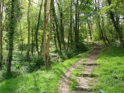 Inside Ivor Woods